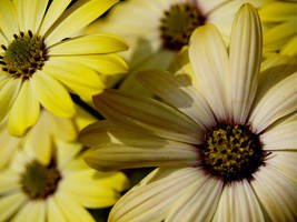 flowers by damo3sp