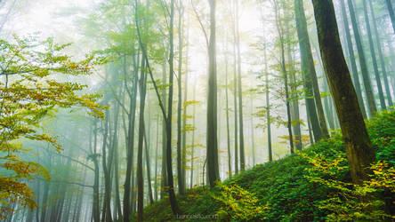 Morning Light v5 by hannes-flo