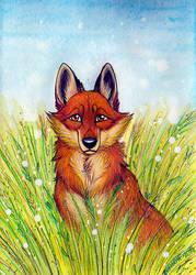 Spring Fox by Zerwolf