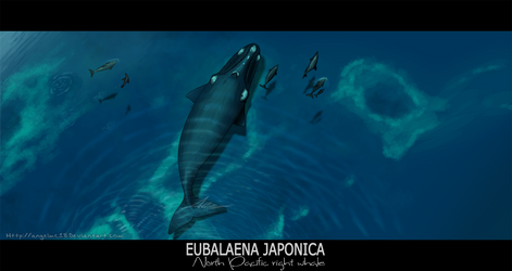 Eubalaena japonica by AngelMC18