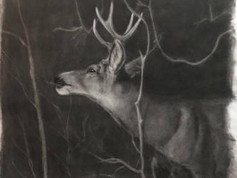 Subtractive buck sketch by thuvia