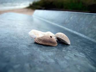 Shells by Islingt0ner