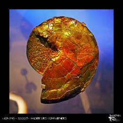 Amazing Ammonite by Kl-lAYMAN