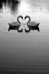 romance by Thrasher05