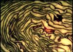 Ariadne's pregnacy by Malgorzata-Skibinska