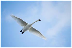 Lord of the wings by Malgorzata-Skibinska