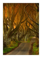 The Dark Hedges II by Klarens-photography