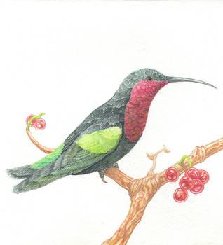 Hummingbird by Mafeo