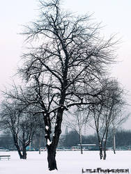 First Snow by LittleFrankenstein