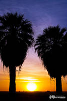 Desert Palms by andmil