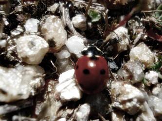 ladybird,. by ca-psyco