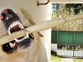 aggressive dog,. by ca-psyco