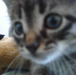 .cat.II by ca-psyco