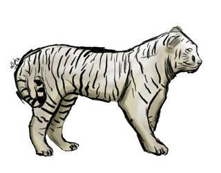 Tiger by AlphaDev