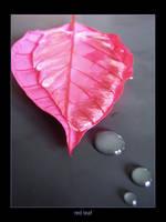 red leaf by SunIsRising