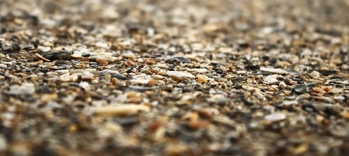 Sea Shore Shells by NC-StormChaser