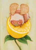 Lemon Drop by camilladerrico