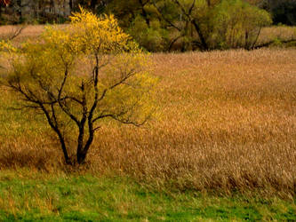 Fields Of Gold by kyrakayy