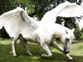 Pegasus by Stalbewa
