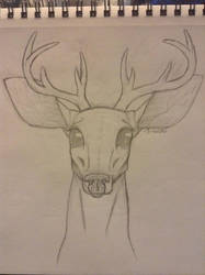 Deer Sketch by CalyTones