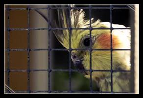 Sad Bird by Mantis-nk