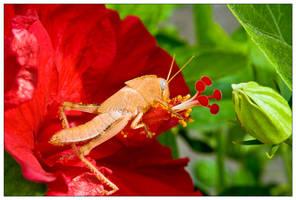 Grasshopper Feast by Mantis-nk
