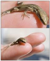 Finger Gecko by Mantis-nk
