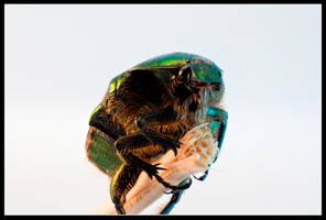 Rosebug on a Stick by Mantis-nk