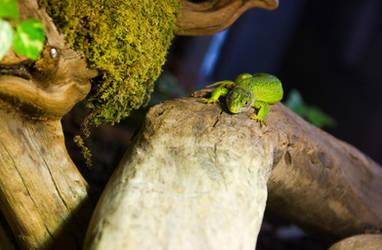 Emerald Lizard by Mantis-nk