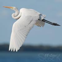 Egret in flight by 88-Lawstock