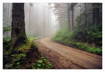Misty Mountain by jasonwilde