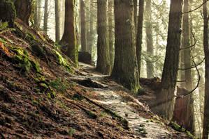 Enchanted Woods by jasonwilde