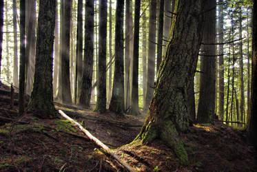 Elven Wood by jasonwilde