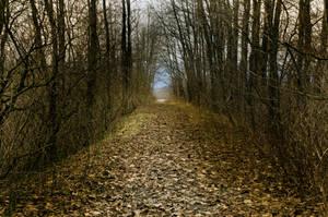 Hollow Roads by jasonwilde