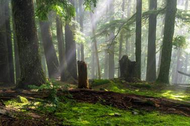 Emerald Beams by jasonwilde