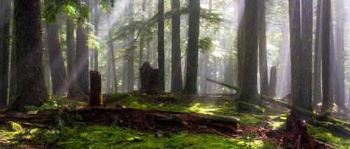 Beams of Autumn by jasonwilde
