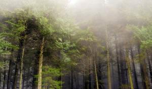 Fog World by jasonwilde