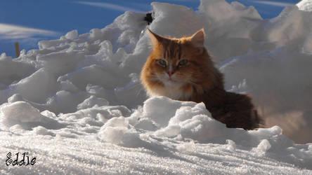 Eddie in the snow by cyberdel
