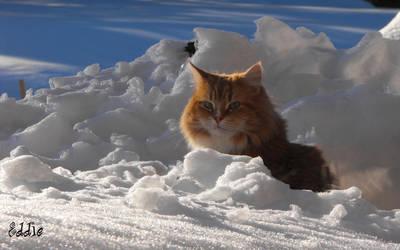 Eddie in the snow 16 10 by cyberdel