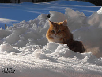 Eddie in the snow 4 3 by cyberdel