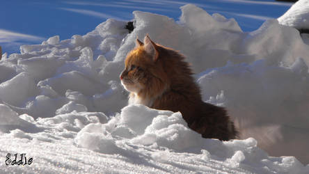 Eddie in the snow, scouting by cyberdel