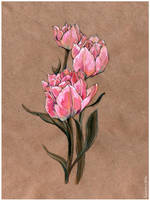 - Tulips - by Losenko