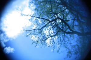 taivas ja puu by Hollows