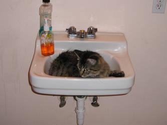 Sink Kitty by ringwraith2004