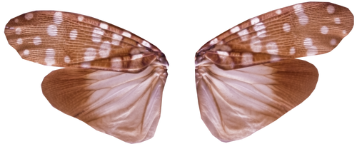 Pixie Wings with Transparency (PNG) by Jantiff-Stocks