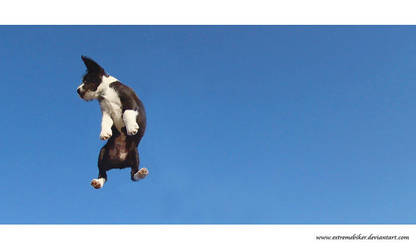 i believe i can fly. by eXtremeBiker