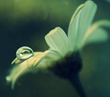 In a fairies world by Kokopa