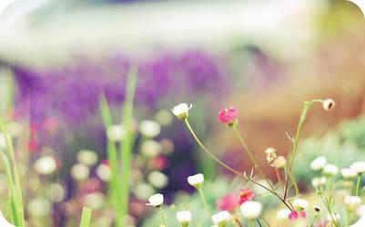 wild flowers by addy-kiddo