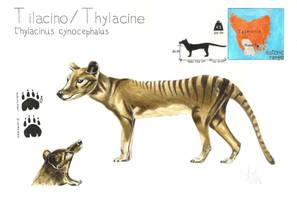 Thylacine by MarcoSalvestrini