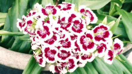 Flowers by Es-Jey
